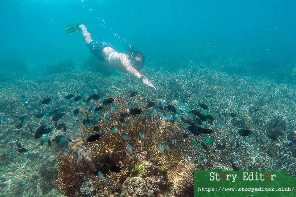 Snorkeling in the Komodo National Park (Indonesia)